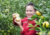 為什麼做自媒體的農民巧婦九妹文化不高,其收入卻相當高?
