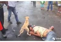 """俗話說""""狗不嫌家貧"""",這隻狗狗面對醉鬼主人""""像極了愛情"""""""