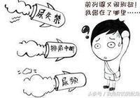 前列腺在哪個部位?前列腺病變是什麼樣的?前列腺位置剖面圖