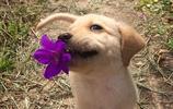 13只萌犬小奶汪來襲,準有一隻可以萌化你的心!