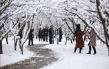 一場雪後,出現了最美的平涼