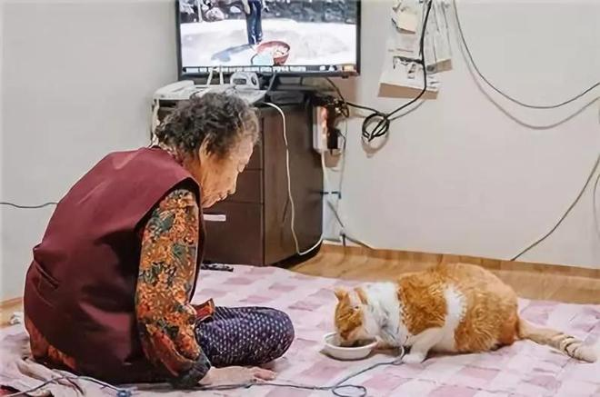 """一橘貓化身""""流浪漢"""",潛入奶奶家後,奶奶卻深深入戲無法自拔!"""
