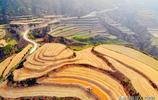 六月麥兒黃 走進山西臨汾農村 金色大地美如畫 欣賞攝影作品吧