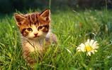 萌寵來到你家:那隻傲嬌的加菲貓來到現代,會發生什麼搞笑事件呢