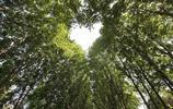 南京:滿城梧桐是南京