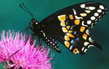 動物圖集:絢麗多色的蝴蝶