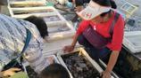 村民們海邊賣天價海鮮,每年能賺近百萬:不按斤稱論個賣