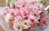 花卉圖集:康乃馨
