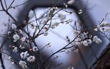 圖蟲靜物攝影:一日春風一日香   濃香散盡醉春風