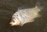 釣魚知識:冬季釣魚全攻略,提高35%魚獲!