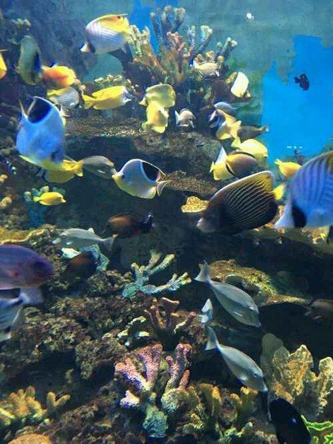 充滿夢幻般的海洋世界《金鷹海洋世界》