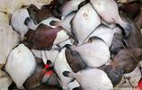 中秋節一過 海鮮價格普降三分之一 過節當天80塊的梭子蟹只賣50了