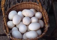 鵝蛋能每天都吃嗎,對身體有哪些好處和壞處?