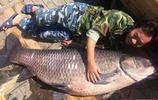 漁民大叔捕獲一條上百斤的大青魚,不賣用鋤頭刮完鱗回家燉了吃肉