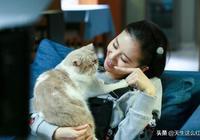 《如果愛》毀三觀?讓劉詩詩佟大為去作天作地吧,我只想看貓!