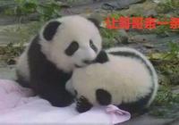 熊貓公開耍流氓,化身親吻狂魔不亦樂乎:喂,110嗎?這裡虐狗