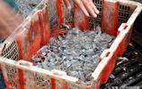 青島碼頭拾鮮 看看10塊錢能買啥樣海鮮 蠣蝦 比管魚挑肥看口味