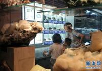中國地質博物館:穿越億萬年的相逢