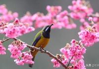 八首爛漫早春詩詞:詩家清景在新春,綠柳才黃半未勻