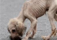小狗狗遭遺棄,她說是為了保護它,原因讓人既悲憤又感動