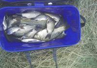 兩年作釣驗證,自制本味爆護餌配方教學,秋冬有這款餌料就夠了