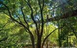 食人樹是真的嗎?