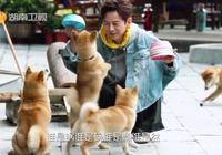"""《嚮往3》黃磊的""""人字拖""""C位出道,導演又慫又倔強:我不"""