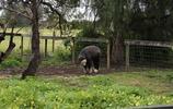 旅行遊記 遊傑拉爾頓 一個家一個夢之澳大利亞自駕