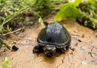 養龜或許不能太極致了哦!