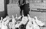 北京烤鴨老照片:真正地道的北京烤鴨,看起來誘人
