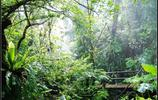 最美的熱帶雨林