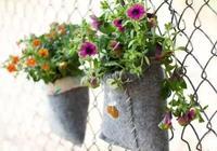 讓小庭院和陽臺成為垂直精緻小花園的8種方法,喜歡拿走!