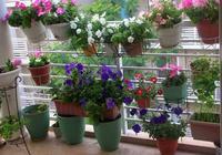 家庭養花如何做好合理佈局