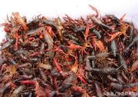 你選對小龍蝦飼料了嗎?談談養殖戶經常糾結的幾個飼料的問題!