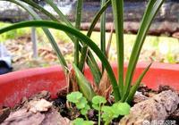用植金石和松樹皮種蘭花怎樣澆水?