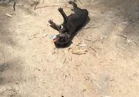 一窩剛出生不久的小奶狗被遺棄垃圾堆,最美女孩給了狗狗希望