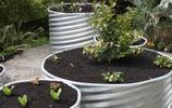菜園福利:想在私家花園裡種菜的看過來,17款菜園案例送給你