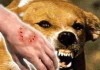 西醫承認治不好狂犬病,那中醫能治好狂犬病嗎?