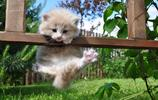 寵物圖集:萌貓-萌寵