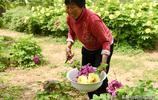 五一小假,2人花了50元,看了牡丹莊園,嚐了牡丹拌菜,划算嗎