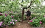 晉南7旬老人不經意果園變花園引眾多遊客,有人出50萬他為啥不賣