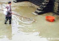 龍蝦塘用電捕魚,對龍蝦生長有問題嗎?