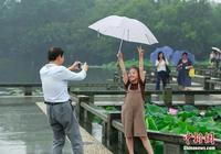 杭州將迎來強降雨 遊客西湖賞荷興致不減