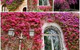 裝飾院子的利器,不僅在視覺上裝飾,嗅覺也不放過