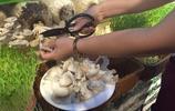 """這家主打""""養生""""牌的火鍋火了:蘑菇豆芽現採現燙,不新鮮不要錢"""