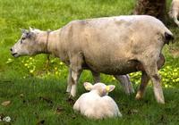 """生肖羊:10月到,肖羊人""""兩喜""""纏身!"""