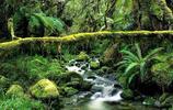 亞馬遜熱帶雨林精美圖集,好美