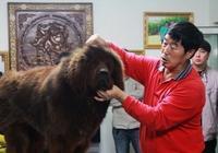 藏獒經濟崩盤:昔日的馬俊仁養藏獒的日子