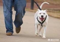 如果出臺新的城市養犬制度,你希望是直接禁狗,還是對不文明養狗現象進行重罰呢?