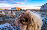 冰島的寵兒